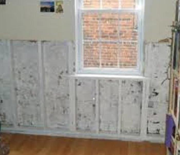 Mold Remediation-residential